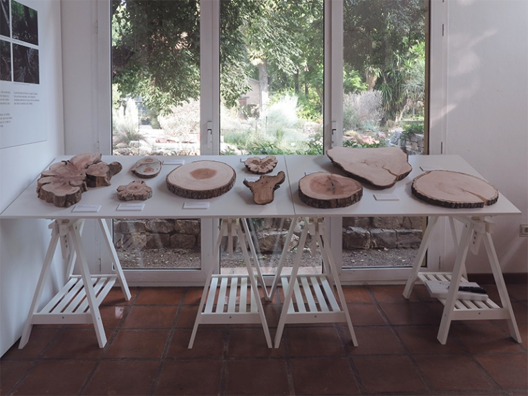 la-memoria-de-los-arboles-en-el-jardin-botanico-de-valencia-3