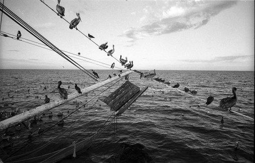 la-pesca-by-alfonso-de-castro-1
