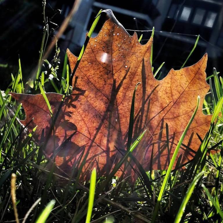 las-hojas-no-saben-by-jaime-esparrach