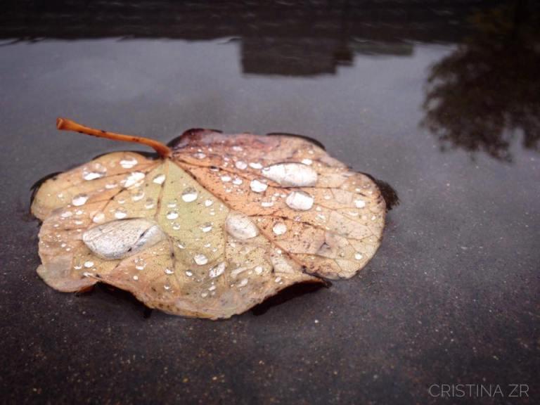 lluvia-de-anoche-by-cristina-zabaleta