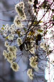 revolving-plants-by-eva-maria-kuhne-wehrmann-2