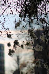 revolving-plants-by-eva-maria-kuhne-wehrmann-3