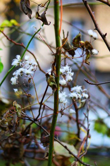 revolving-plants-by-eva-maria-kuhne-wehrmann-8