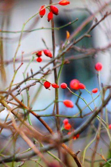 revolving-plants-by-eva-maria-kuhne-wehrmann-9