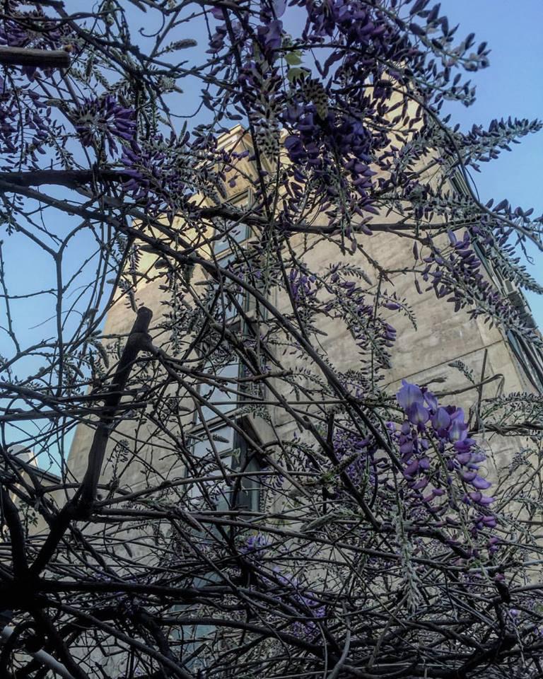 april-u-beogradu-by-marija-lynch