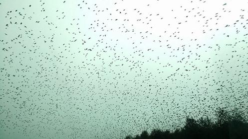 el-ball-dels-ocells-by-espe-pons