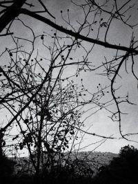 MAKING OF LA MEMORIA DE LOS ARBOLES BY MIGUEL ORTEGA 4