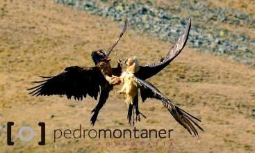 SOLO QUEBRANTAS BY PEDRO MONTANER 1