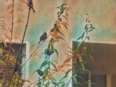 THE BIRDS BY EVA-MARIA KÜHNE-WEHRMANN 4