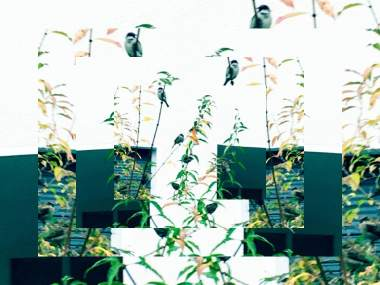 THE BIRDS BY EVA-MARIA KÜHNE-WEHRMANN 5