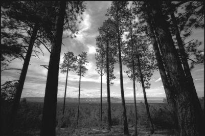 DOMINIQUE LEYVA- CÓDICE ATZLÁN 3