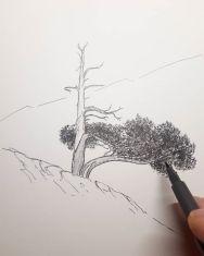 Árbol n°10, pino negro by Miguel Ortega