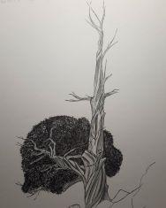 Árbol n°6, sabina negral by Miguel Ortega