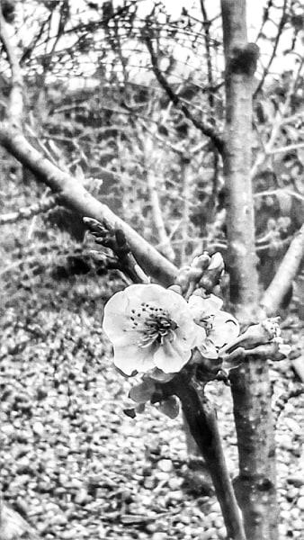 Compartiendo la primavera desde mi privilegiada atalaya by Victor Santolaria 13
