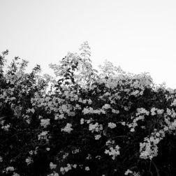 SIN SALIDA BY NATALIA GIUMELLI 8